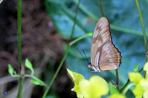 Butterfly, 2013