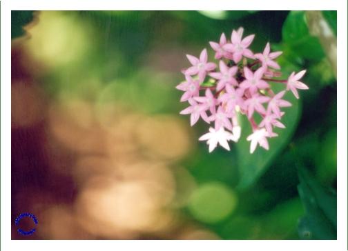 EG01-4 Star Flowers, 2004