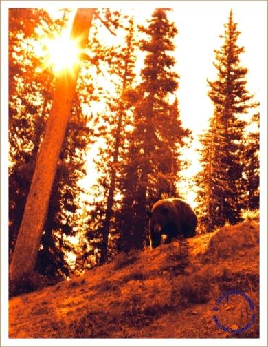 G16-5 Bear, 1968