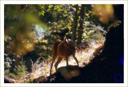 G16-2 Deer, 1973
