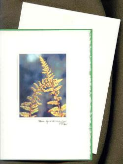 Ferns Touching (Card)