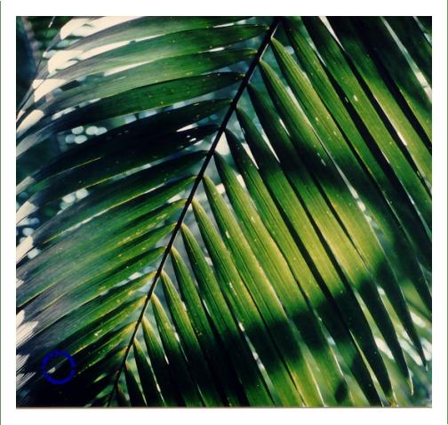 G04-2 Palm, 1985