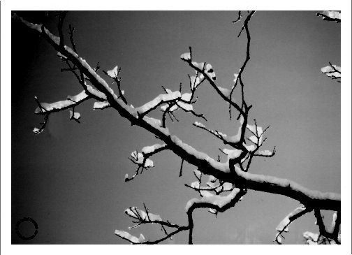 G19-3 Branches (B/W), 1995