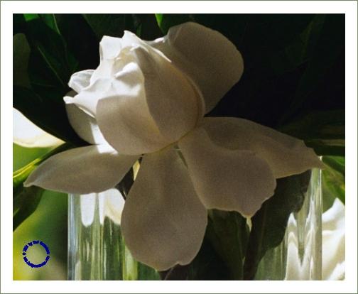 G26-1 Gardenia, 2003