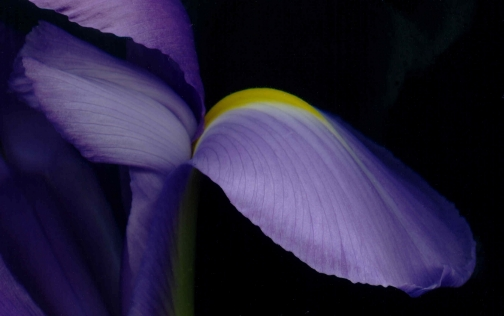G26-2 Iris, 2004