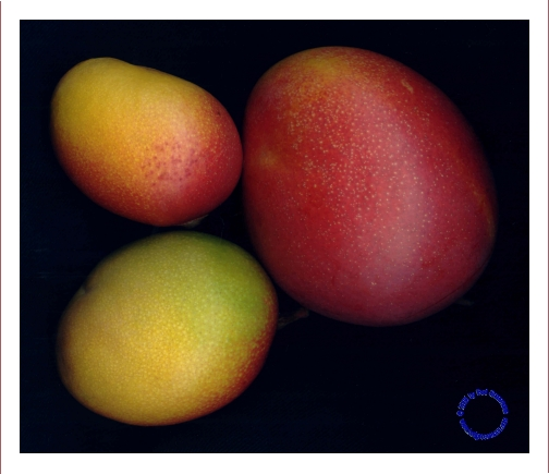 G25-6 Mangos, 2005