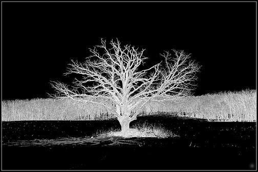 Oak (2013)