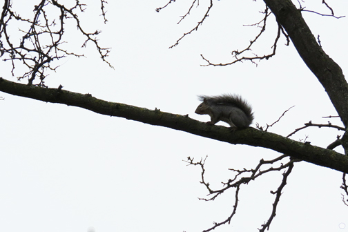 Nut-Seeking Creature Going High When He Might Have Been Expected to Go Low (2016)